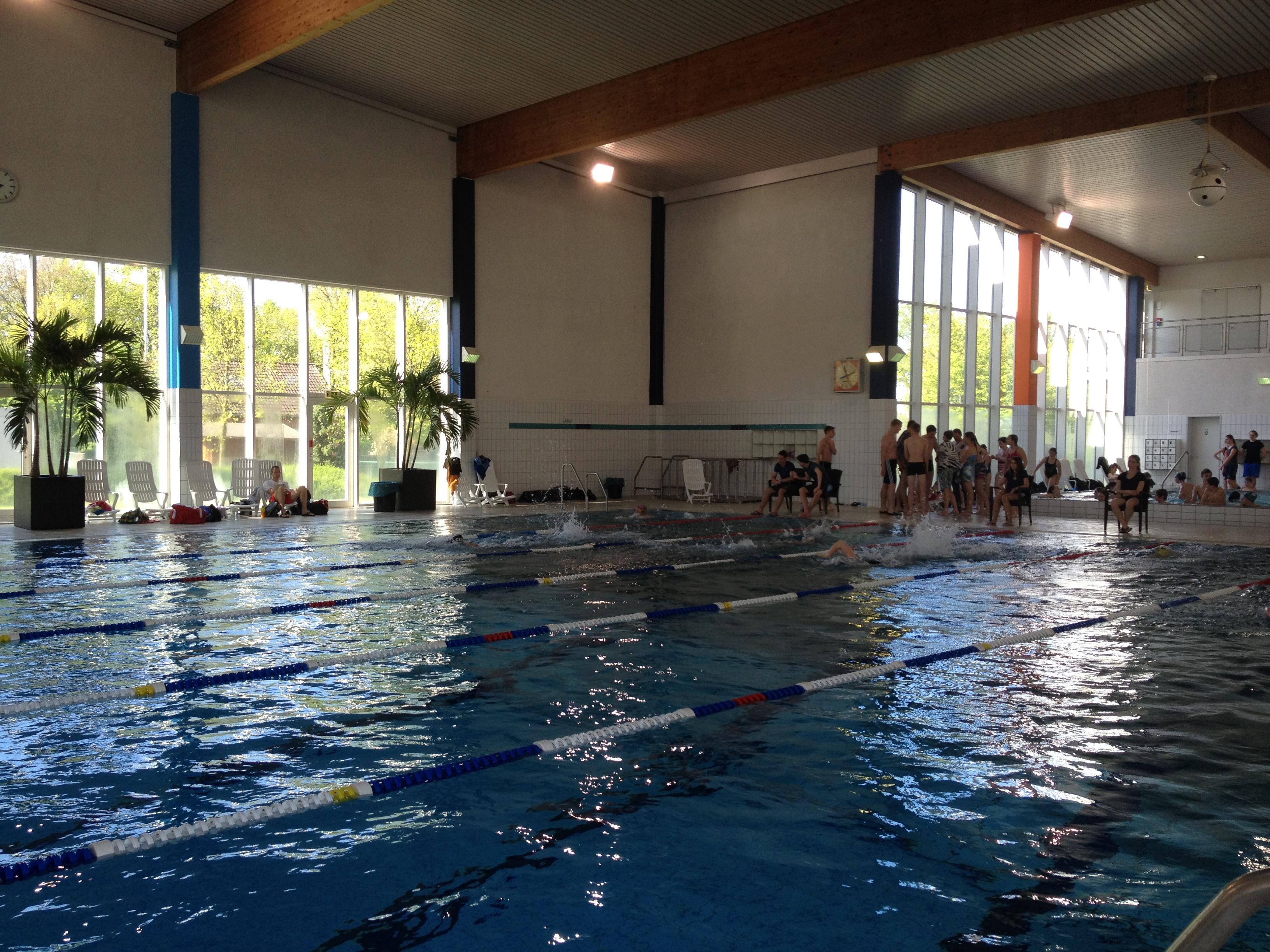 Schwimm-Mannschaften des Steins erfolgreich…