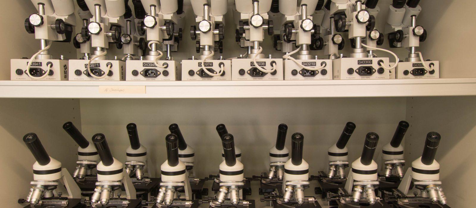 Junge Forscherinnen und Forscher am Stein